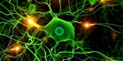 Imagem de Neurogênese: podemos forçar o cérebro a se regenerar? no site TecMundo