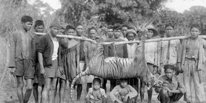 Imagem de 11 animais extintos há menos de 20 anos no site TecMundo