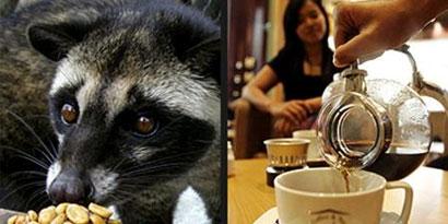 Imagem de Café mais caro do mundo vem de fezes de animais no site TecMundo