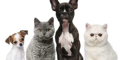 Imagem de 10 apps para ajudar a cuidar de seu animal de estimação no site TecMundo