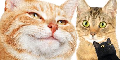 Imagem de Erro 404: Illuminati? Os gatos é que vão dominar o mundo! no site TecMundo
