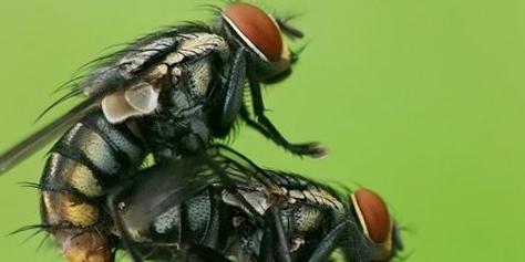 Imagem de Cientistas conseguem controlar mente de moscas com laser no site TecMundo