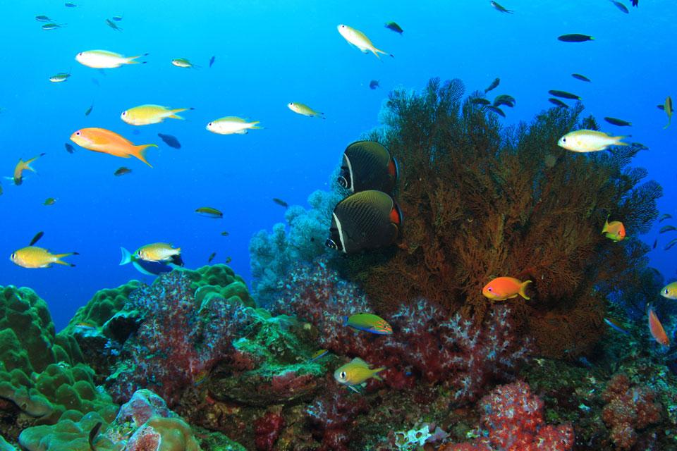 Imagem de Câmera de celular grava própria queda no mar e resgate por mergulhador no tecmundo