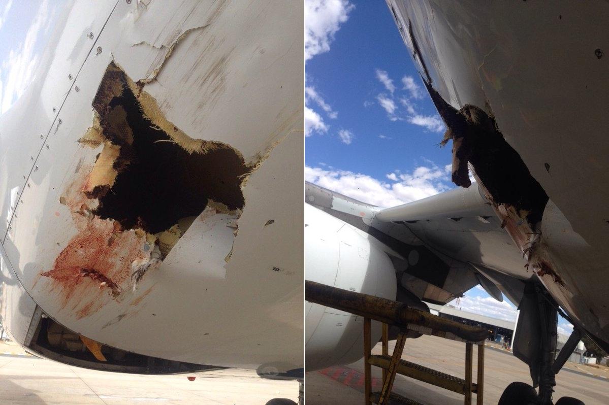 Imagem de Veja o estrago que um pássaro pode causar ao colidir com um avião comercial no tecmundo
