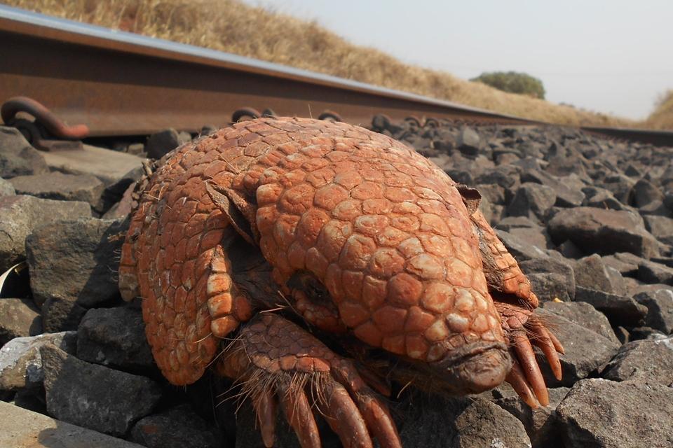Imagem de Aplicativo permite reportar atropelamentos de animais em linhas de trem no tecmundo