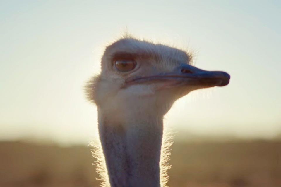 Imagem de Comercial do Gear VR com avestruz voando fatura sete prêmios em Cannes no tecmundo