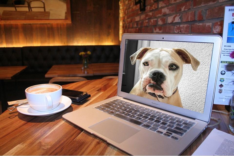 Imagem de Saiba como monitorar seu animal de estimação usando o Skype no tecmundo