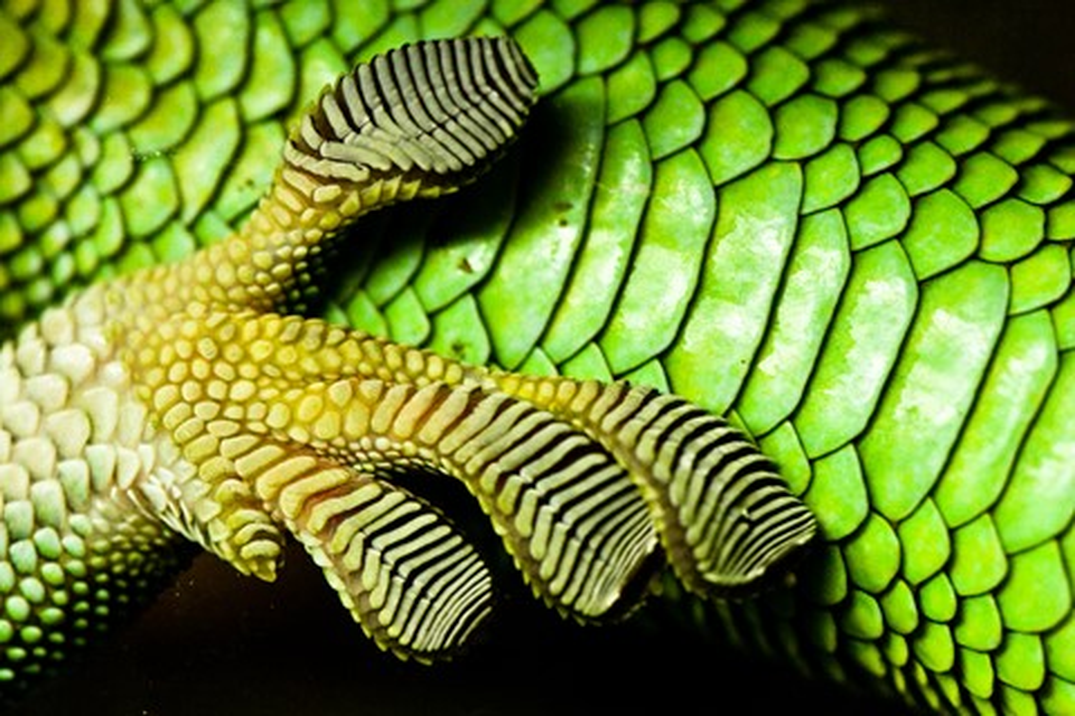 Imagem de Já é possível comprar a fita superadesiva inspirada nos pés das lagartixas no tecmundo