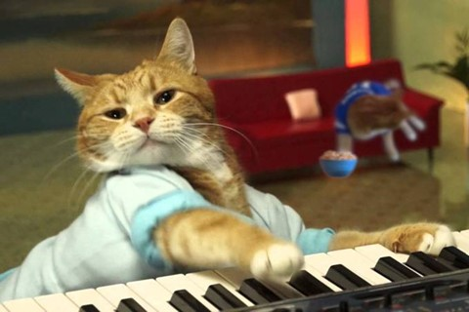 Imagem de Gato Bento, do meme Keyboard Cat, falece aos nove anos no tecmundo