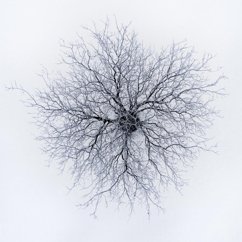 Árvore vista de cima