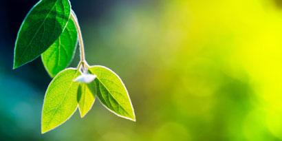 Imagem de Cientistas criam energia elétrica a partir de fotossíntese no site TecMundo