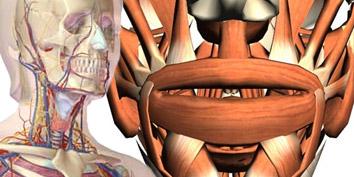 Imagem de Sites interativos para navegar pelo corpo humano no site TecMundo
